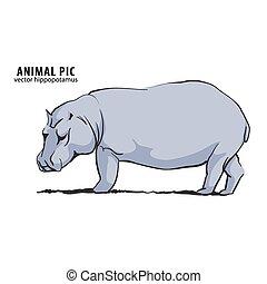 Illustration of hippo