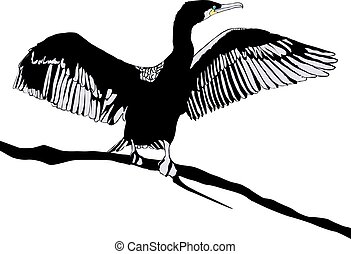 Cormorant - Illustration of Hop off Cormorant Over White...