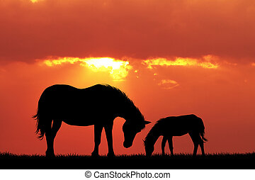 horse and pony at sunset - illustration of horse and pony at...