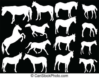 horses collection - vector