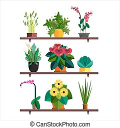 Illustration of houseplants, indoor and office plants in pot. Dracaena, fern, bamboo, spathyfyllium, orchids, Calla lily, aloe vera, gerbera, snake plant, Mother-in-law tongue, anthuriums. Flat plants pattern, vector textures set. Flower shop