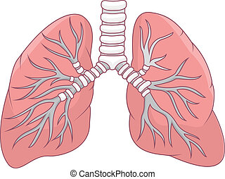 Illustration of human lung - Vector illustration of human...