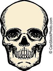 Illustration of human skull in vintage style. Design element for logo, label, sign, emblem, poster. Vector illustration