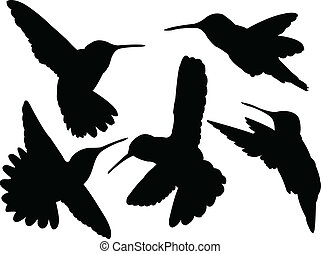 humming bird silhouette collection - illustration of humming...