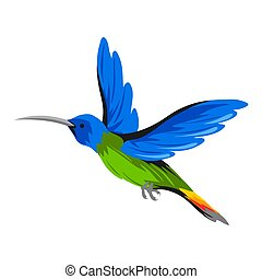 Illustration of hummingbird. Tropical exotic bird on white background.