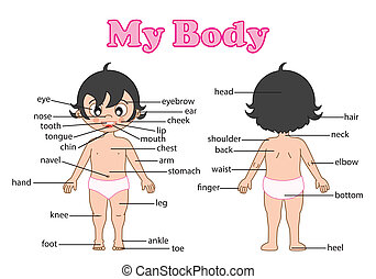 illustration of isolated vocabulary part of body on white