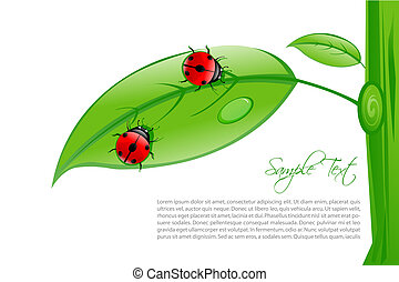 lady bug on leaf with sample text - illustration of lady bug...