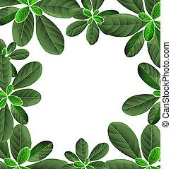 leaf border background