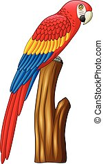 Illustration of macaw on a branch