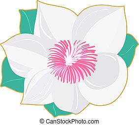 Illustration of Magnolia