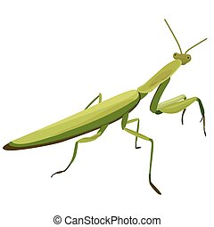 illustration of Mantis on a white background