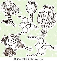 Illustration of narcotics - poppy and opium - hand drawn style