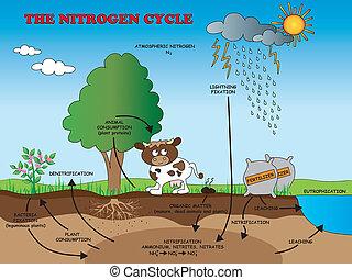 nitrogen cycle - illustration of nitrogen cycle for school