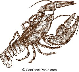 illustration of one crayfish - Vector antique engraving...