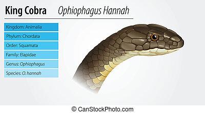 Illustration of Ophiophagus hannah King Cobra