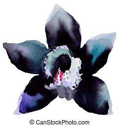 Illustration of orchid flower
