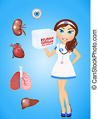 organ donor for trasplant - illustration of organ donor for...