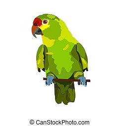 illustration of parrot on white background