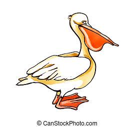 illustration of pelican