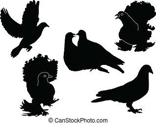 pigeon - vector - illustration of pigeon - vector