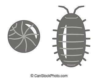 Illustration of Pill bug on white background.