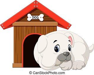 Pit Bull Dog