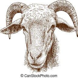 illustration of rams head - Vector engraving illustration of...