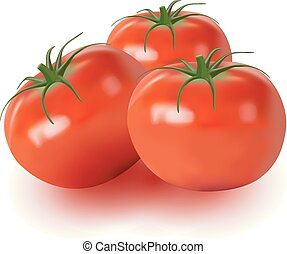 Realistic vector of tomatoes isolated on white background
