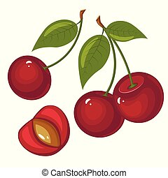 illustration of ripe cherries on a white background. Berries with stems and green leaves.