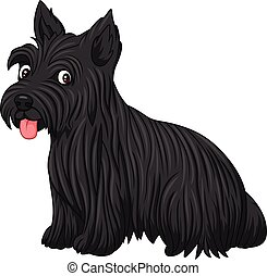 Scottish terrier dog breed - Illustration of Scottish...
