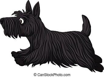 Scottish terrier dog breed - Illustration of Scottish...