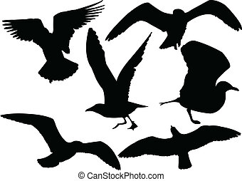 illustration of seagull collection - vector