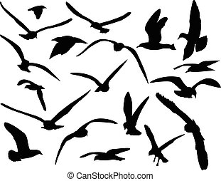 seagull - vector - illustration of seagull - vector