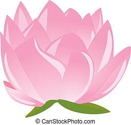illustration of sigle pink lotus(wa