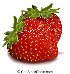 strawberries - illustration of strawberries on isolated ...
