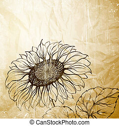 Illustration of sunflower.  Illustration.