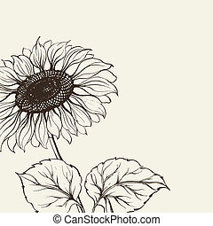 Illustration of sunflower.  Illustration.