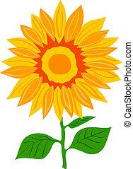 Illustration of Sunflower