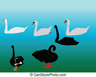 swans collection - vector