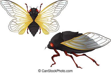 Illustration of the Cicadas