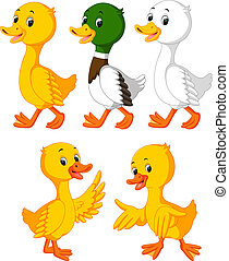 the collection of the cute ducks in the different color -...