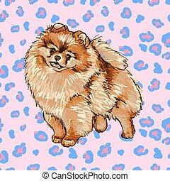 Illustration of the dog breed Pomeranian