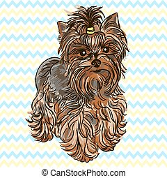 Yorkshire Terrier - Illustration of the dog breed Yorkshire...