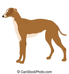 Illustration of the dog of the sort greyhound - Dog of the...