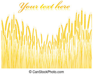 Illustration of the field of wheat