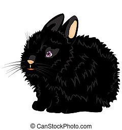 Illustration of the nice black rabbit
