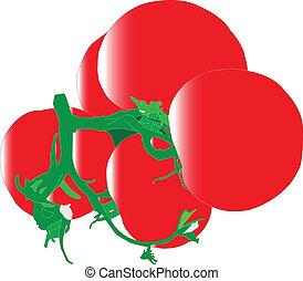 tomato - vector