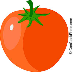 illustration of tomato