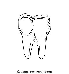 Illustration of tooth. Dental, medicine, health concept.