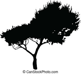 Illustration of tree - vector